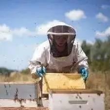 买的蜂蜜柠檬茶能排毒吗 蜂蜜的种类介绍 蜂蜜泡沫 蜂蜜分类 蜂蜜什么时间喝最好