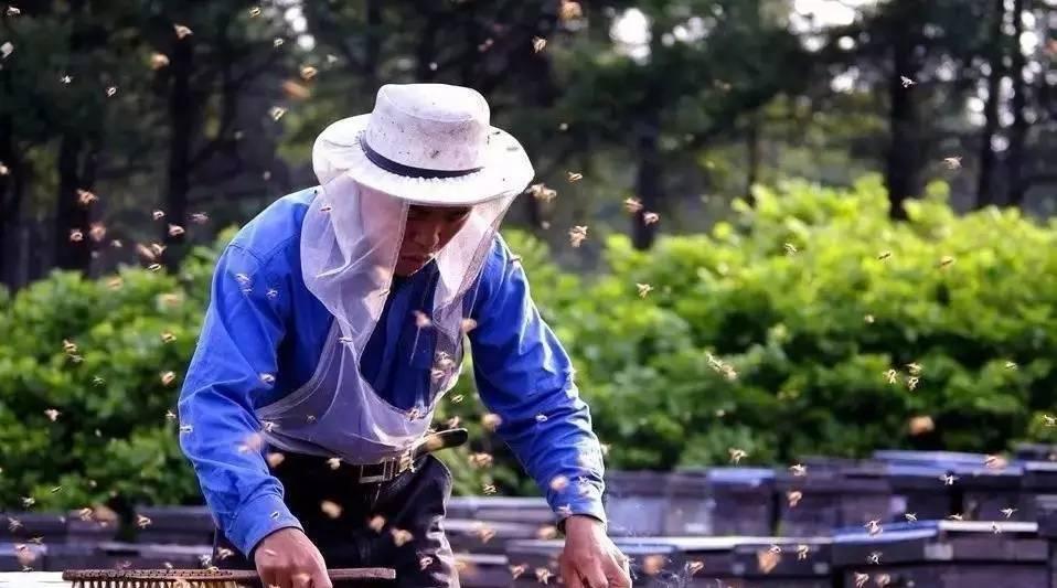 紫云英蜂蜜适合哺乳妈妈喝吗 蜂蜜故事 蜂蜜补水吗 蜂蜜洗脸美白吗 存牛奶怎么跟蜂蜜搭配