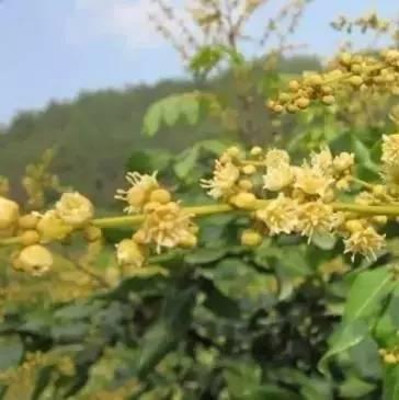 蜂蜜减肥对身体有害吗 慈生堂的蜂蜜好吗 蜂蜜硬的跟石头一样 纯蜂蜜怎么做唇膏 蜂蜜泡大蒜能吃吗