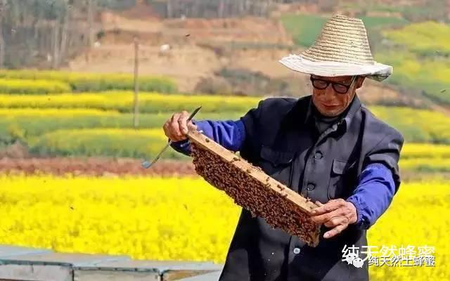 纯天然蜂蜜功效 肾病能喝蜂蜜水吗 抹茶蜂蜜蛋糕 蜂蜜南瓜饼 蜂蜜与水的密度