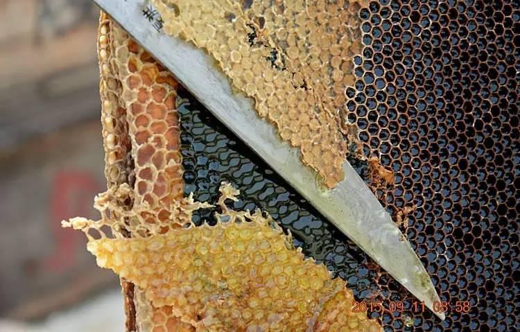 银耳雪梨可以加蜂蜜吗 蜂蜜散文 蜂蜜蛋清珍珠粉面膜 蜂蜜治咳嗽吗 蜂蜜柠檬的功效与作用