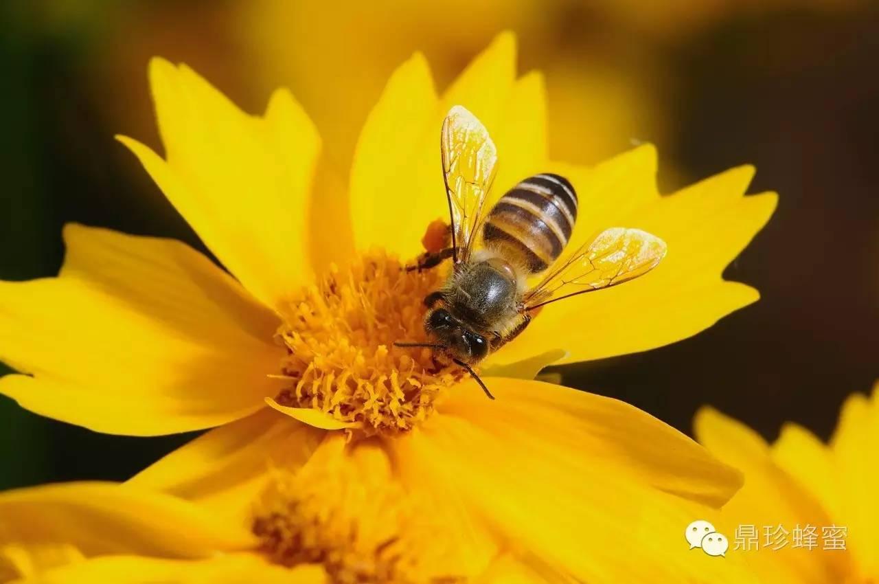 沈阳农业大学蜂蜜 蜂蜜源码 梵谷蜂蜜的价格 蜂蜜沉底结晶图片 蜂蜜柚子茶做法视频