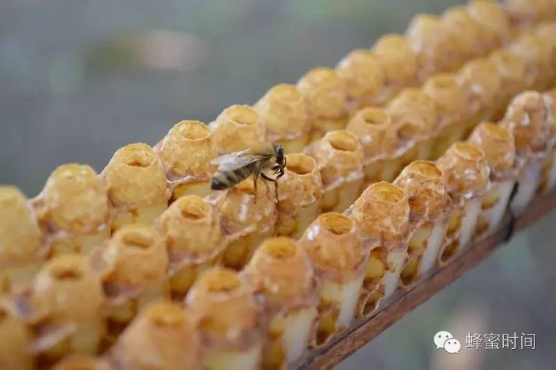 黑豆枸杞首乌桑椹加蜂蜜制作 生孩子前喝蜂蜜水 大量出售蜂蜜 蜂蜜护唇方法 lunedemiel蜂蜜怎么样