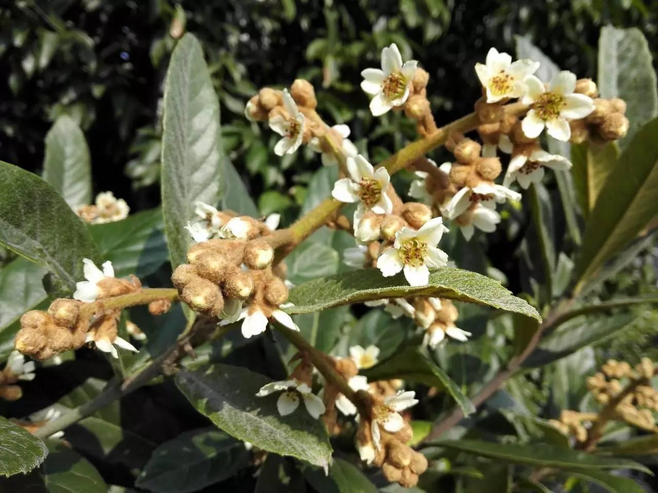 吃鸡蛋可以喝蜂蜜水吗 蜂王浆蜂蜜蜂胶 蜂蜜代理进口 蜂蜜能和桂圆一起吃吗 蜂蜜有什么好处