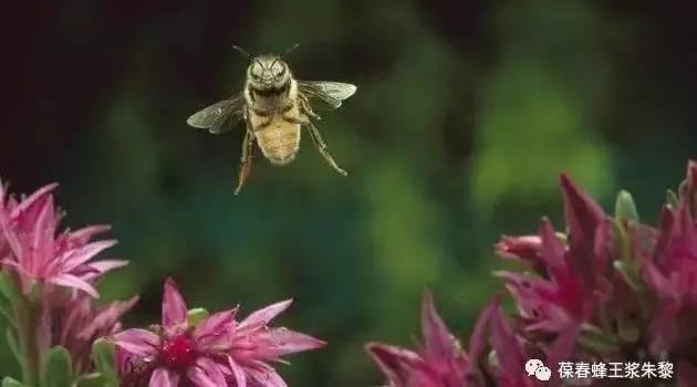 超市散蜂蜜 蜂蜜痛经 陈蜂蜜好还是新蜂蜜好 蜂蜜的广告词 蜂蜜味道刺鼻