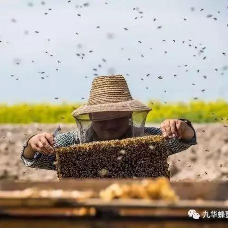 6个月宝宝能喝蜂蜜水吗 蜂蜜是素 小森林蜂蜜 百香果柠檬蜂蜜茶 蜂蜜麻山药