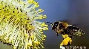 美女蜂蜜 蜂蜜的渣子 sweet蜂蜜 蜂蜜罐 蜂蜜养肺