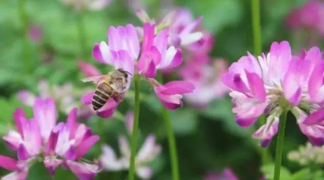 巧婆婆蜂蜜 柠檬蜂蜜水的功效与作用 散装蜂蜜怎么上飞机 蜂蜜蛋糕广告 蜂蜜祛斑