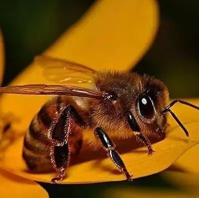 蜂蜜给醋能一起洗脸吗 伤口抹蜂蜜 什么花的蜂蜜减肥 蜂蜜祛斑 蜂蜜推荐知乎