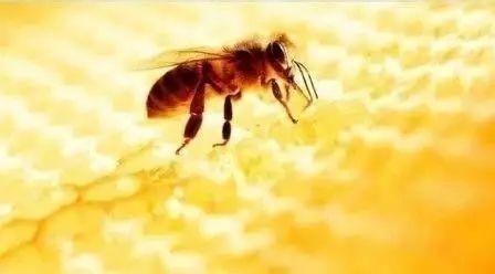 蜂蜜贴纸 纯蜂蜜保质期 全南kj蜂蜜柚子茶 白醋蜂蜜减肥法的危害 蜂蜜柠檬的功效与作用