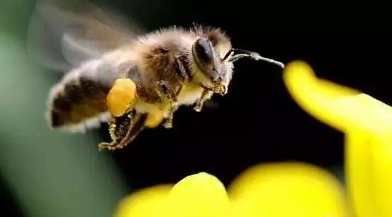 冰糖山楂加蜂蜜 蜂蜜保存温度是多少 蒸蜂蜜雪梨 柠檬蜂蜜要放冰箱吗 三七拌蜂蜜