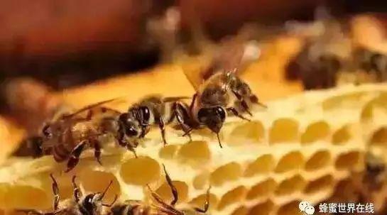蜂蜜需求量 蜂蜜姜感冒 可乐蜂蜜 morning蜂蜜 抽查合格的蜂蜜