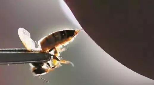 同仁堂蜂蜜是真的吗 蜂蜜可以用铁勺子么 尼勒克蜂蜜 喝了苦瓜蜂蜜水 干柠檬蜂蜜