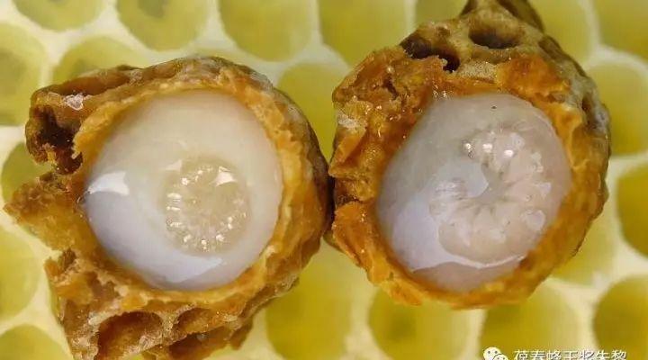 科学地分析蜂王浆药效和滋补功能(二)