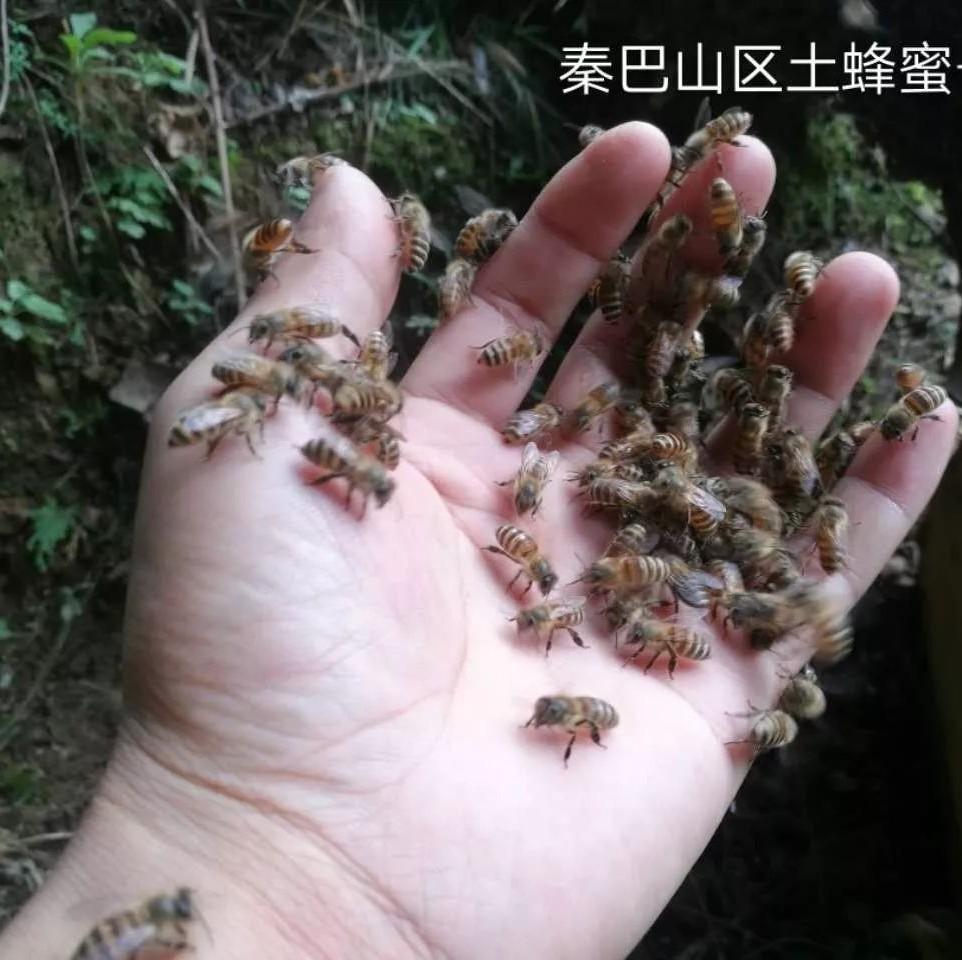 体虚可以喝蜂蜜水吗 三日蜂蜜水减肥法 蜂蜜有美白的作用吗 做蜂蜜蛋糕 蜂蜜和地瓜