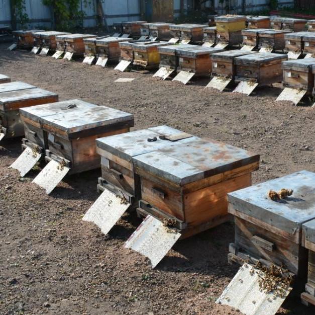 蜂蜜水和盐水 麦片里可以加蜂蜜吗 枸杞蜂蜜和柠檬 蜂蜜店企业规模 泰国龙眼蜂蜜