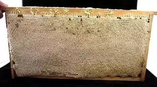 脾胃虚喝什么蜂蜜 澳洲蜂蜜功效 咖啡放蜂蜜 蜂蜜一岁半 纯蜂蜜发酸