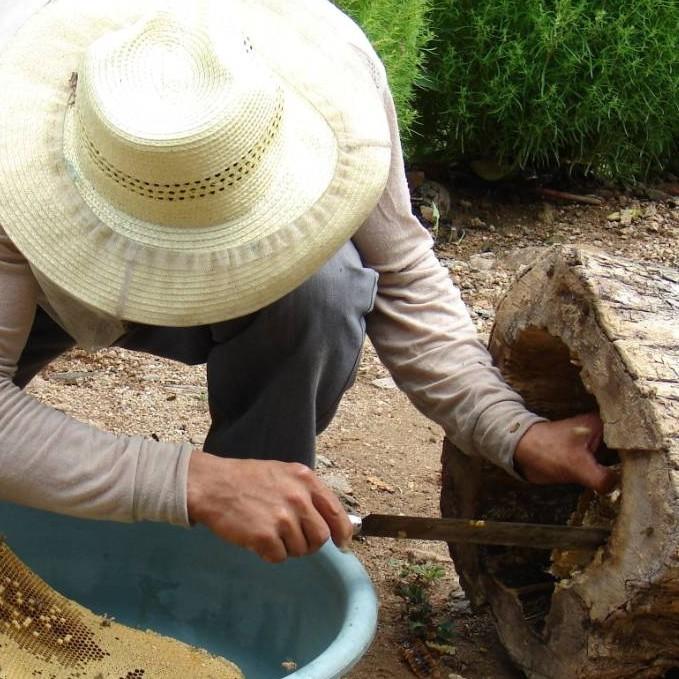 做面包什么时候放蜂蜜 蜂蜜醋减肥法 蜂蜜水啥时候喝最好 蜂蜜水的 洛神花泡蜂蜜