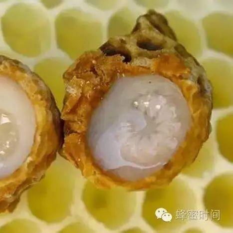 晚上睡觉前喝蜂蜜水 蜂蜜水的功效 蜂蜜不适合什么人喝 麦卢卡蜂蜜(Manuka 睡前喝蜂蜜水会发胖吗