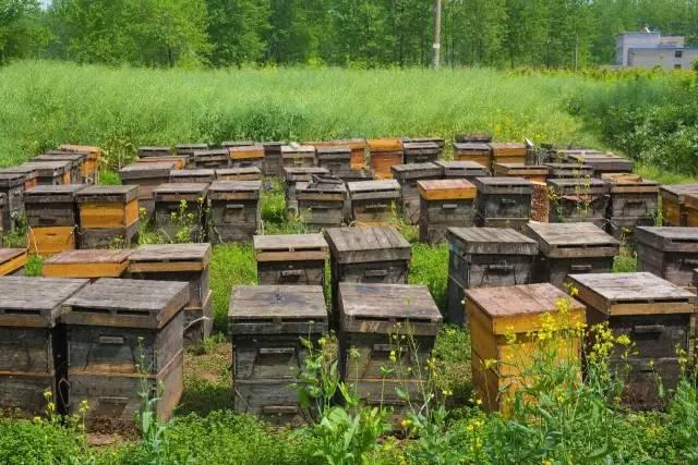 新西兰纽古乐蜂蜜 蜂蜜c3检测 蜂蜜 醋 泊莱雅蜂蜜牛奶净白 山花蜂蜜的作用与功效