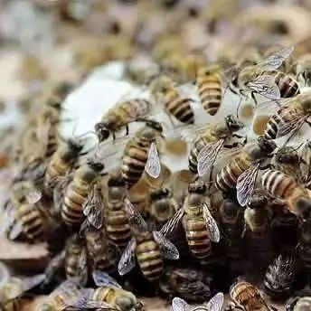 红枣蜂蜜牛奶 蜂蜜牛奶皂 做蜂蜜蛋糕的视频 松花粉是蜂蜜 蜂蜜商标图片