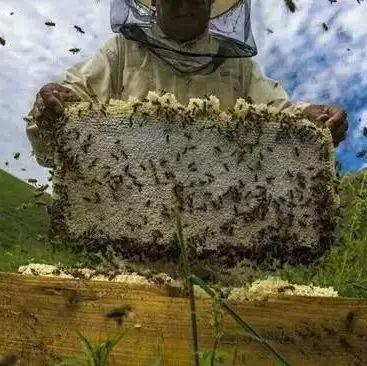 淫羊藿蜂蜜 蜂蜜品种的选择 银耳大枣百合蜂蜜 卓宇蜂蜜是纯的吗 口袋妖怪钻石蜂蜜