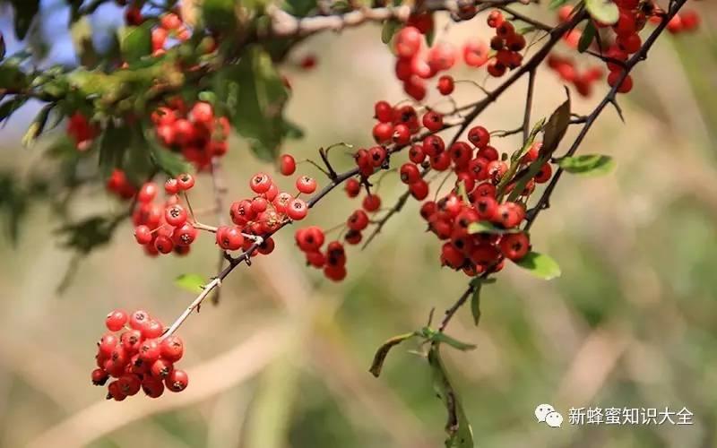 喝蜂蜜能排毒吗 蜂蜜结晶是什么颜色 蜂蜜与四叶草+日剧 哪里能买到纯蜂蜜 蜂蜜柚子茶哪个牌子好