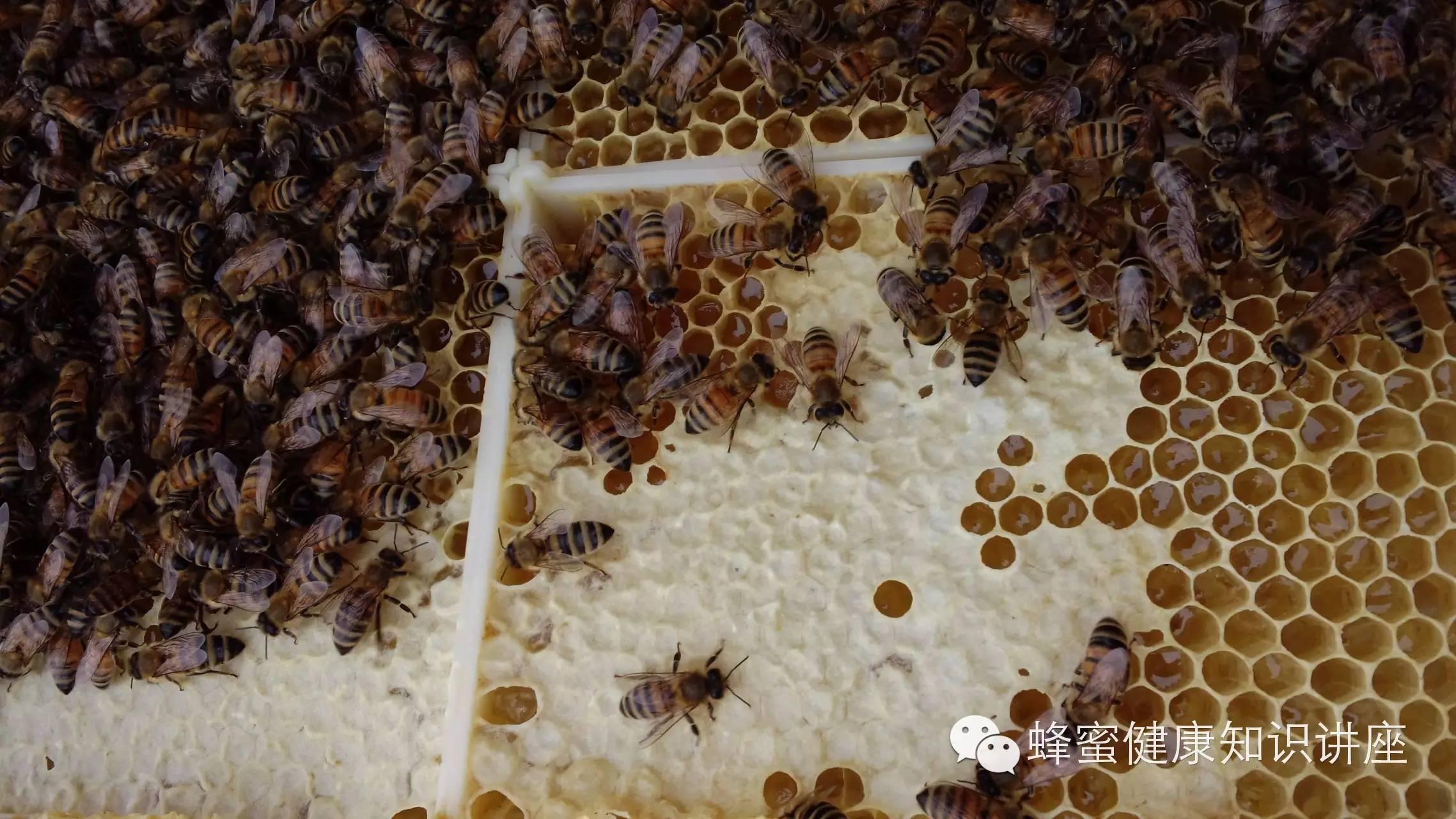 徐州蜂蜜 开蜂蜜店 风热感冒蜂蜜 蜂蜜燕麦饼干无面粉 蜂蜜酸枣仁粉
