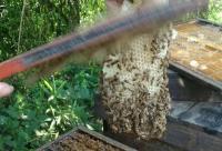 【蜂蜜篇】蜂蜜都有哪些药理作用?
