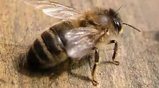 智仁洋槐蜂蜜礼盒装 白萝卜煮蜂蜜 什么蜂蜜补肾么 蜂蜜 蜂蜜波美度怎么测