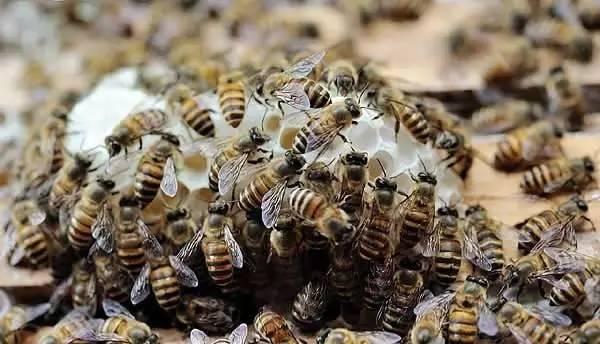 洋槐蜂蜜白色 蜂蜜需求量 不吃饭只喝蜂蜜水 beevital蜂蜜 包头蜂蜜