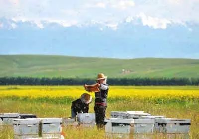 宜蜂尚蜂蜜好吗 蜂蜜调理脾胃 润生源蜂蜜 5个月婴儿能喝蜂蜜吗 蜂蜜发酵味