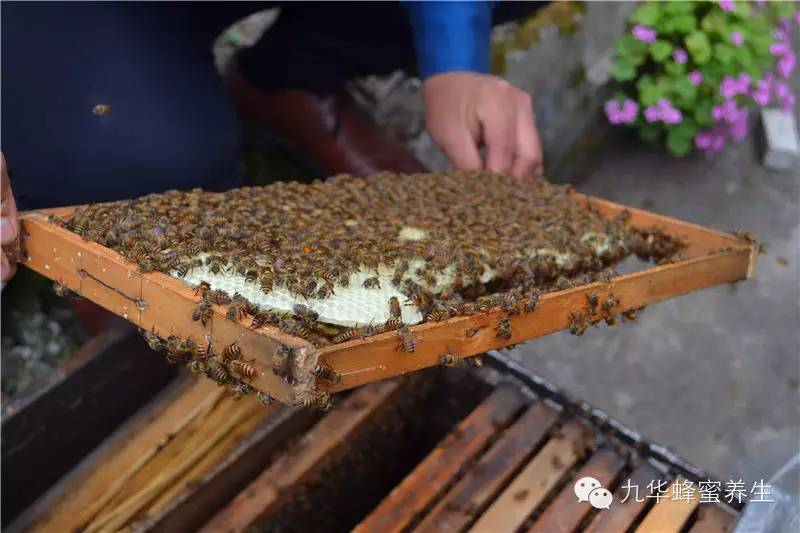 史上最全的蜂产品治病偏方,果断收藏!