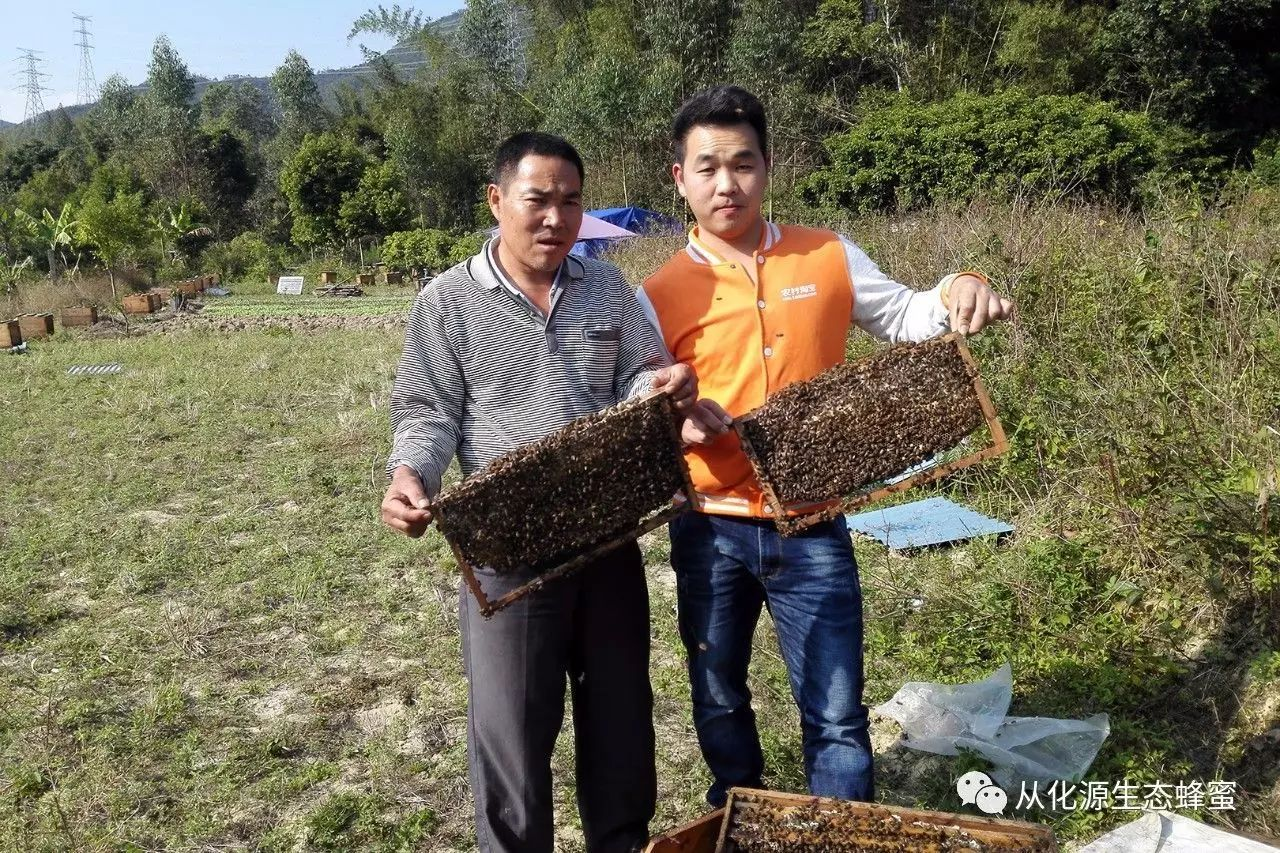 上古世纪发酵蜂蜜 蜂蜜的种类 羊油蜂蜜饵 葱白加蜂蜜 老北京蜂蜜枣糕加水吗