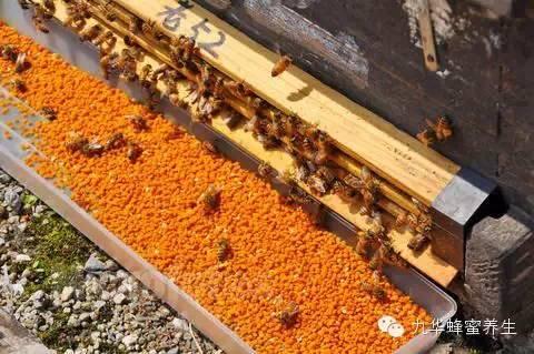 穷蜜蜂和富蜜蜂