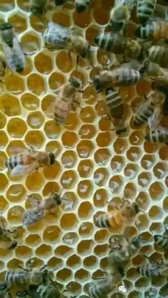 蜜蜂历史 蜂蜜对咽炎有好处吗 蜂蜜里面有虫 什么蜂蜜对胃好 纯蜂蜜价格
