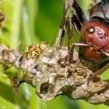 蜂蜜降火吗 泉州蜂蜜 蜂蜜结晶怎么办 椴树蜂蜜什么颜色 柠檬蜂蜜常温