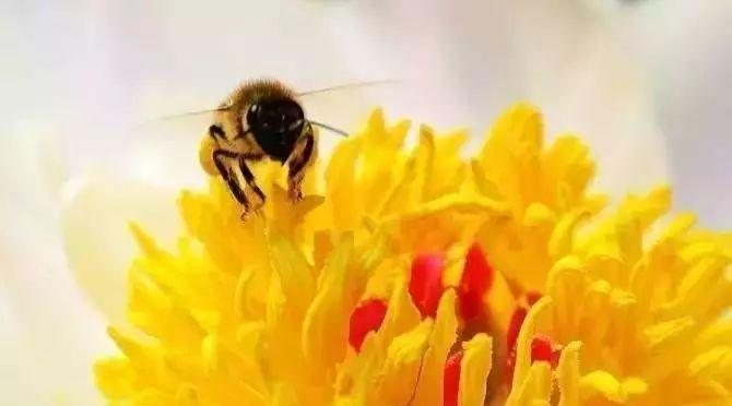 孕九个月可以喝蜂蜜水吗 花粉和蜂蜜的功效 快递蜂蜜怎么包装 蜂蜜怎么喝才能减肥 蜂蜜验证