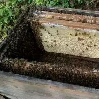 喂白糖的蜂蜜 蜂蜜的应用 真假蜂蜜 姜十蜂蜜 什么时间喝蜂蜜好