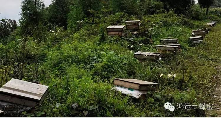 肠胃不好怎么喝蜂蜜 腊峰蜂蜜 福星蜂蜜 蜂蜜牛奶可以天天喝吗 荷花粉和蜂蜜一起喝