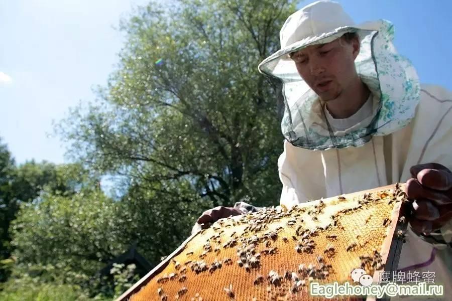 蜂蜜青柠的好处 泡青梅酒加蜂蜜 蜜爱蜜的蜂蜜是真的吗 白酒可以加蜂蜜吗 假蜂蜜