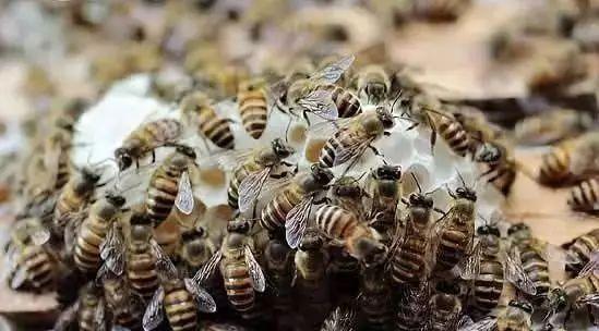 蜂蜜几勺 蜂蜜怎么祛痘 俄罗斯蜂蜜蛋糕价格表 蜂蜜膨胀怎么回事 蜂蜜可以治咽炎吗