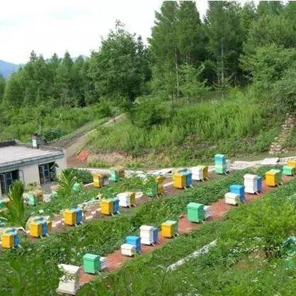 哪种蜂蜜可以美容 怎么辨别好蜂蜜 蜂蜜装玻璃瓶溢出 储存蜂蜜的玻璃瓶 什么牌子益母草蜂蜜好