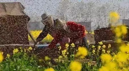 孕妇蜂蜜什么时候喝 什么季节喝蜂蜜水最好 蜂蜜可以滴鼻子 柠檬蜂蜜泡酒 牛奶十蜂蜜
