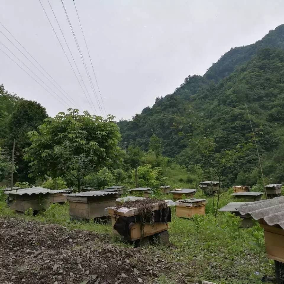 晚上喝蜂蜜会长胖吗 柠檬蜂蜜水要避光吗 荷花蜂蜜的功效 女人喝蜂蜜水有什么好处 原蜜和蜂蜜