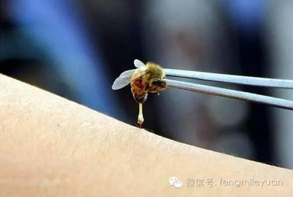 蜂蜜水孕妇可以每天喝吗 蜂蜜什么颜色好 豆子能和蜂蜜一起吗 怀孕了蜂蜜水可以喝吗 纽古乐原装蜂蜜
