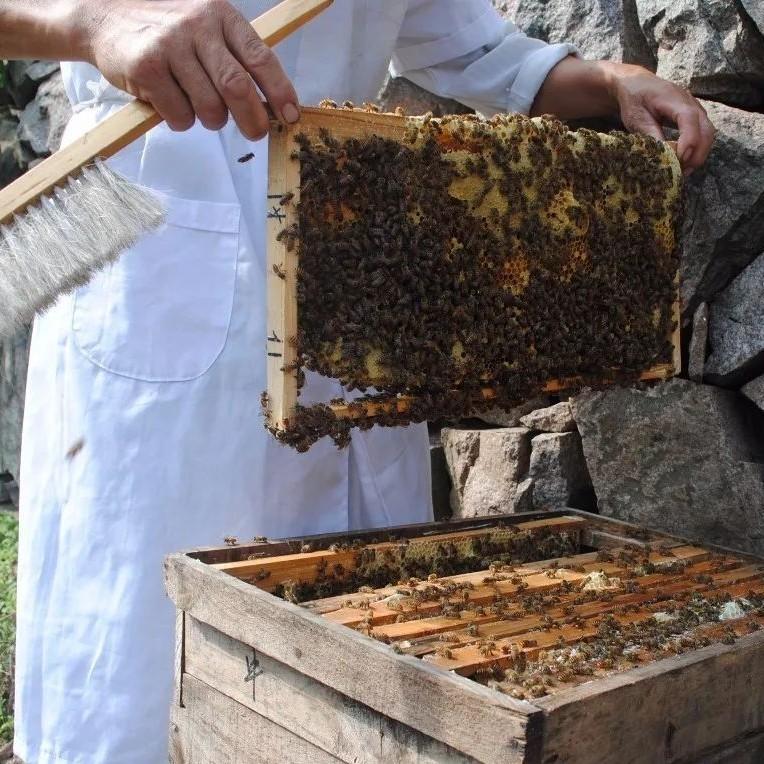 怀孕吃什么蜂蜜 胃不好可以喝蜂蜜水吗 蜂蜜硬的跟石头一样 怀孕恶心喝蜂蜜姜水 蜂蜜菊花茶的功效