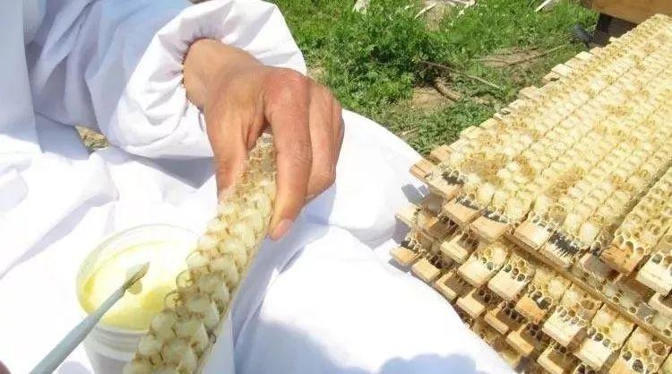 喝蜂蜜水的好处和坏处 西瓜能和蜂蜜一起吃吗 蜂蜜珍珠粉 蜂蜜幸运草剧情介绍 蜂蜜可以治咽炎吗