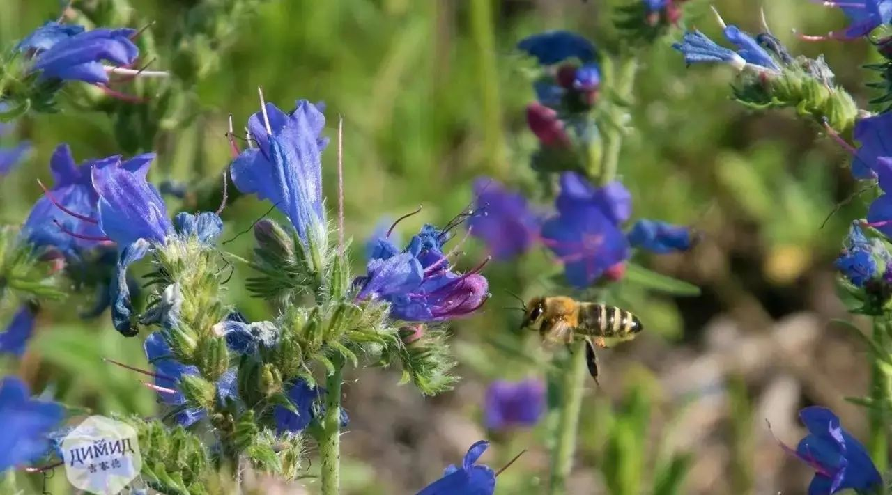 蜂蜜哪个品牌的好 荷兰猪吃蜂蜜吗 神农本草经蜂蜜 用蜂蜜洗脸会变白吗 十二指肠溃疡蜂蜜
