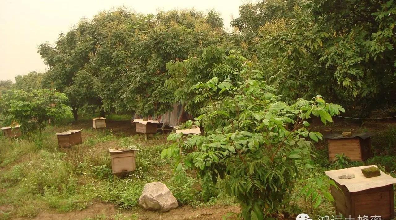 莲子蜂蜜粥 景德镇蜂蜜 凉性的蜂蜜 孕后期蜂蜜 奇异果百香果蜂蜜